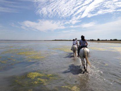 Покататься вместе с детьми на лошадях по бескрайним дюнам