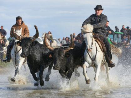 Ярмарка лошадей