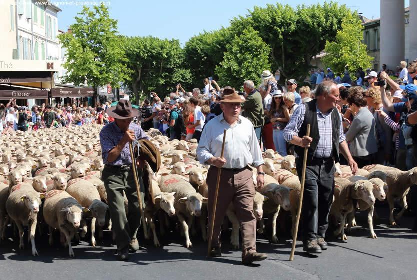 Праздник перегона овец