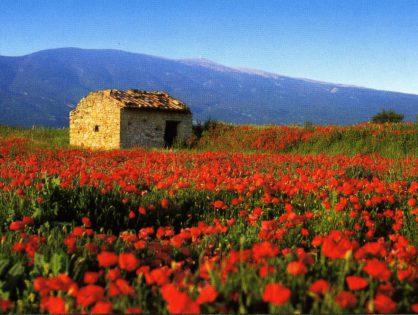 Какие сюрпризы готовит июнь в Провансе?